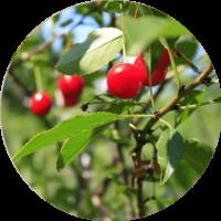 cellavent-ingredients-referenzen-prucera